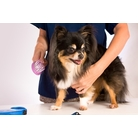 buy | Top Notch Dog Grooming In Fort Myers |