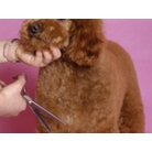 buy | Profitable Pet Grooming Salon Business |