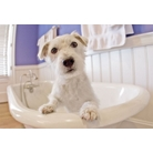 buy | Well Established Pet Grooming Business In Long Island |