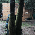 comprar | Beariz | Paintball en Beariz, Ourense | ES899179