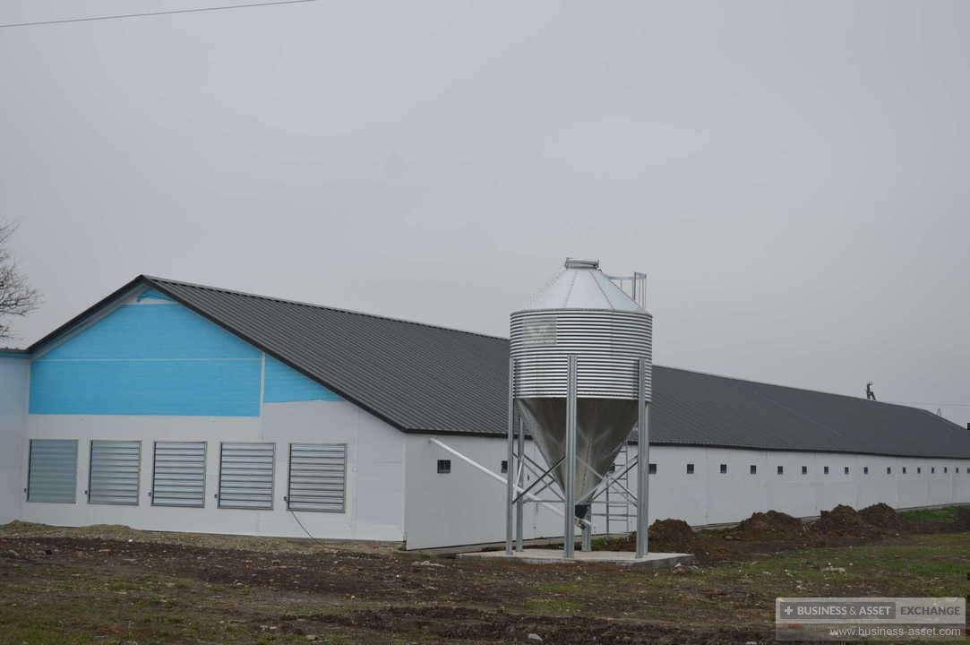 Продажа бизнеса птицефабрика москва частные объявления москва по строительству
